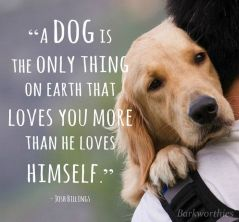 4a6ba1b7185fa016c8296a38111110aa--love-my-dog-puppy-love